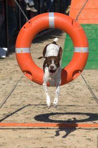 agility - photo by daniel zamora