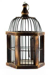 empty cage - photo by Ammar Abd