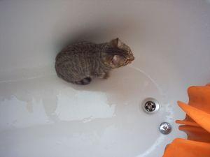 cat_in_bath_joão gouveia