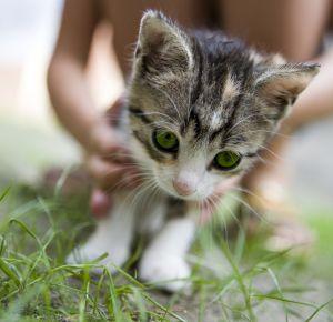 kitten - photo by Justyna Furmanczyk