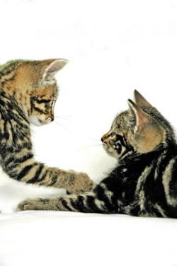 cats_facing_eachother_Photo by Dominic Morel