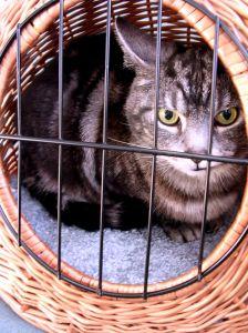 cat in basket - photo by Debbie Schiel
