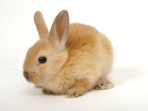 little red bunny - photo by Kostas Jariomenko