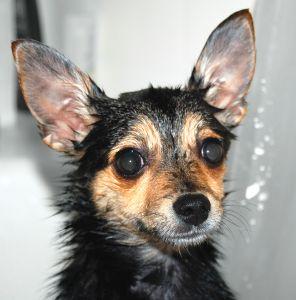 wet puppy - photo by Benjamin Earwicker