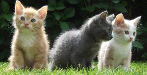 801083_kittens_photo_by_sander_akkerman.jpg