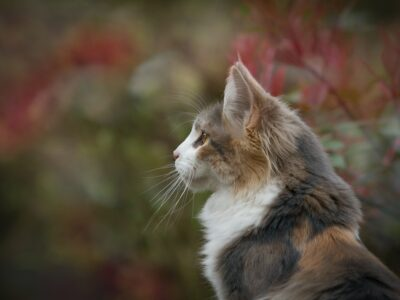 Helping Your cat Stay Healthy