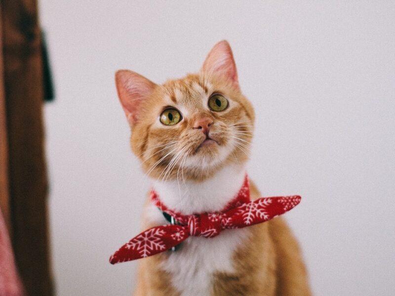 Cat listening to cat whisperer